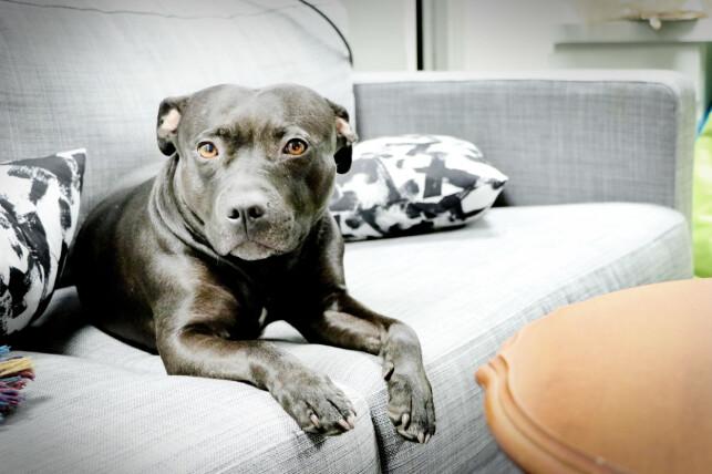 I Krillbites lokaler er også studiohunden Vaffel på besøk. 📸: Ole Petter Baugerød Stokke