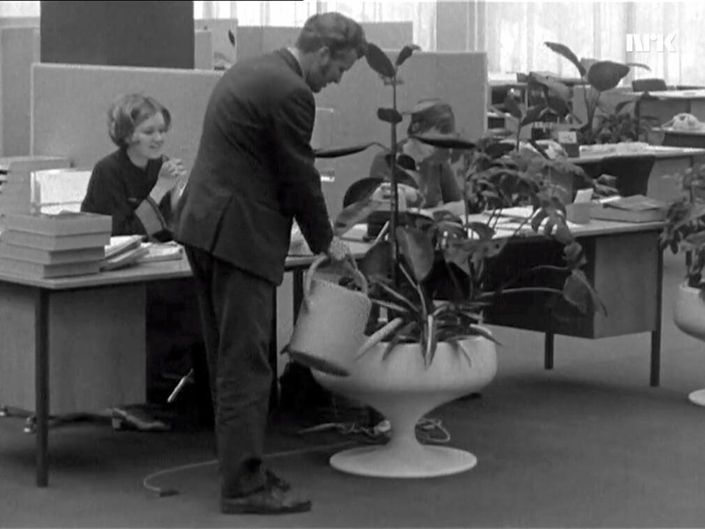 En mann vanner potteplantene i et åpent kontorlandskap i 1970. Kvinnen bak synes det er litt rart. 📸: NRK