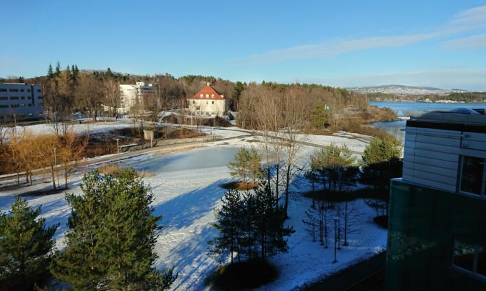 Utsikten fra vinduet hos Marius. 📸 Privat