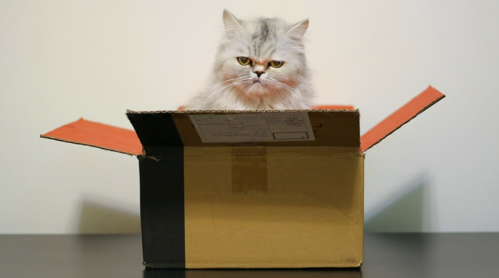 """Webpack 5 kan bli trøblete å installere. 📸: <a href=""""https://unsplash.com/@sahandbabali?utm_source=unsplash&amp;utm_medium=referral&amp;utm_content=creditCopyText"""">Sahand Babali</a> / <a href=""""https://unsplash.com/s/photos/box-cat?utm_source=unsplash&amp;utm_medium=referral&amp;utm_content=creditCopyText"""">Unsplash</a>"""
