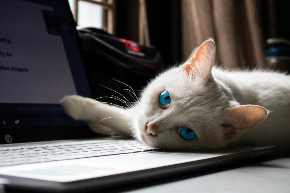 "Svelte og NPM oppdateres. 📸: <a href=""https://unsplash.com/@tracamyng?utm_source=unsplash&amp;utm_medium=referral&amp;utm_content=creditCopyText"">Trà My</a> / <a href=""https://unsplash.com/s/photos/cat-computer?utm_source=unsplash&amp;utm_medium=referral&amp;utm_content=creditCopyText"">Unsplash</a>"