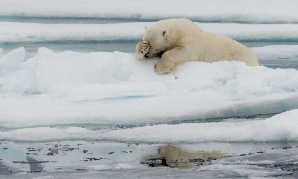 📸: Poulard Jacques på Comedy Wildlife Photo