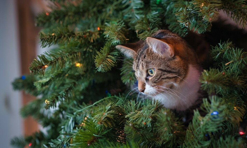 "📸: <a href=""https://unsplash.com/@thepaintedsquare?utm_source=unsplash&amp;utm_medium=referral&amp;utm_content=creditCopyText"">Jessica Lewis</a> on <a href=""https://unsplash.com/s/photos/cat-christmas?utm_source=unsplash&amp;utm_medium=referral&amp;utm_content=creditCopyText"">Unsplash</a>"