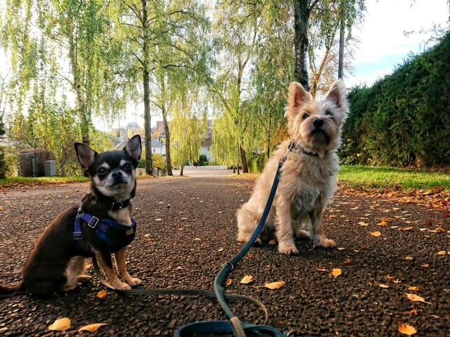- Når vi ikke er ved datamaskinen, så finner du oss ute på tur med hundene. 📸: Privat